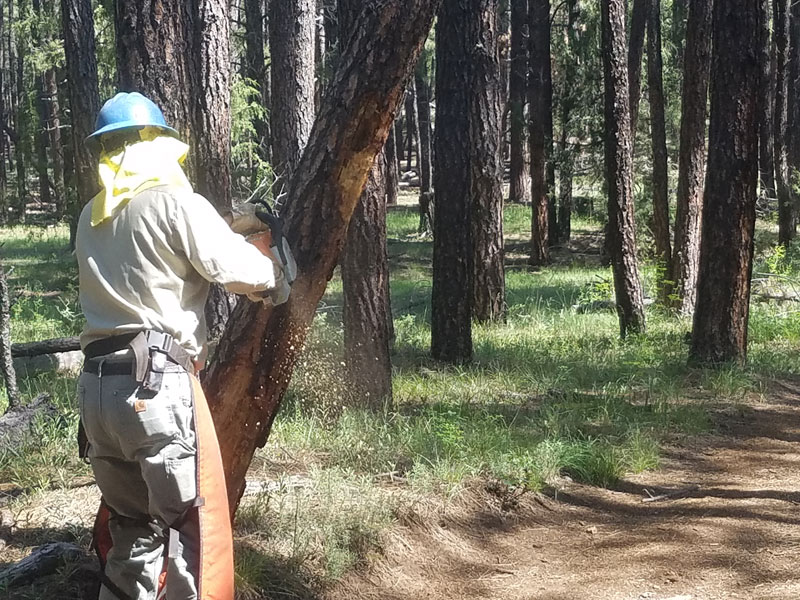 Forest Service removing the safety hazard